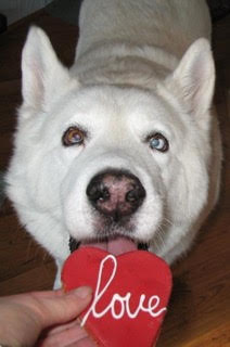 Emery dog cookie