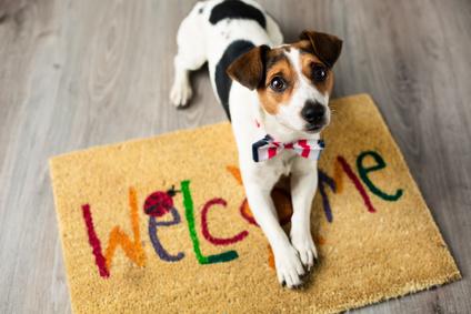 Cute dog posing on the carpet